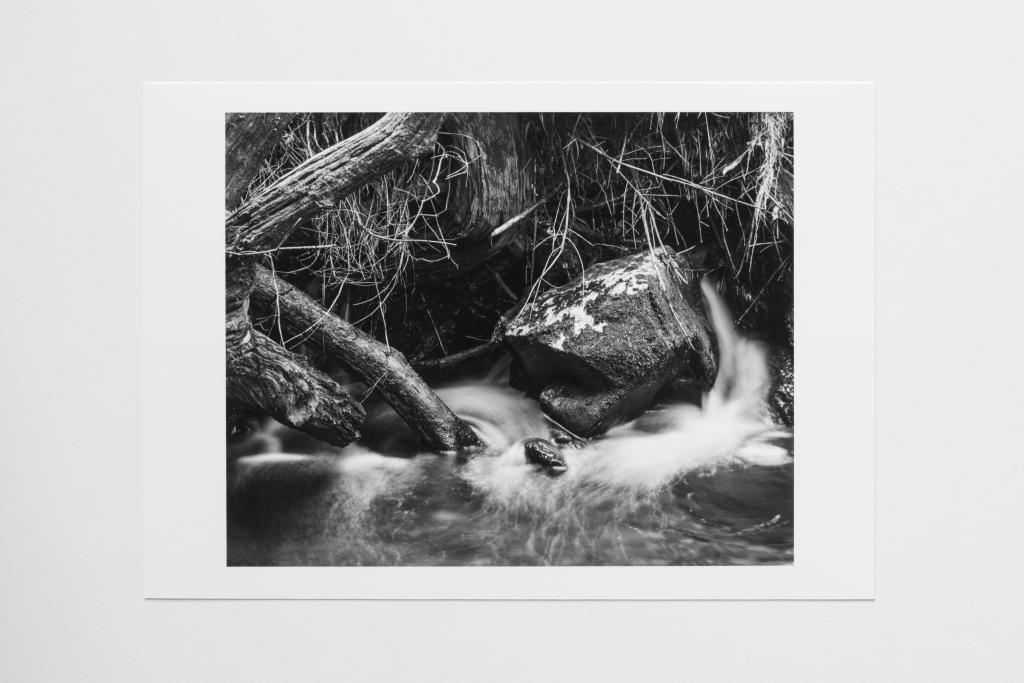 fallen tree river scotland print