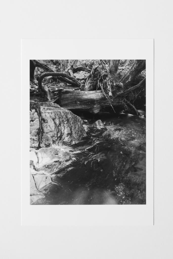 fallen tree scotland print