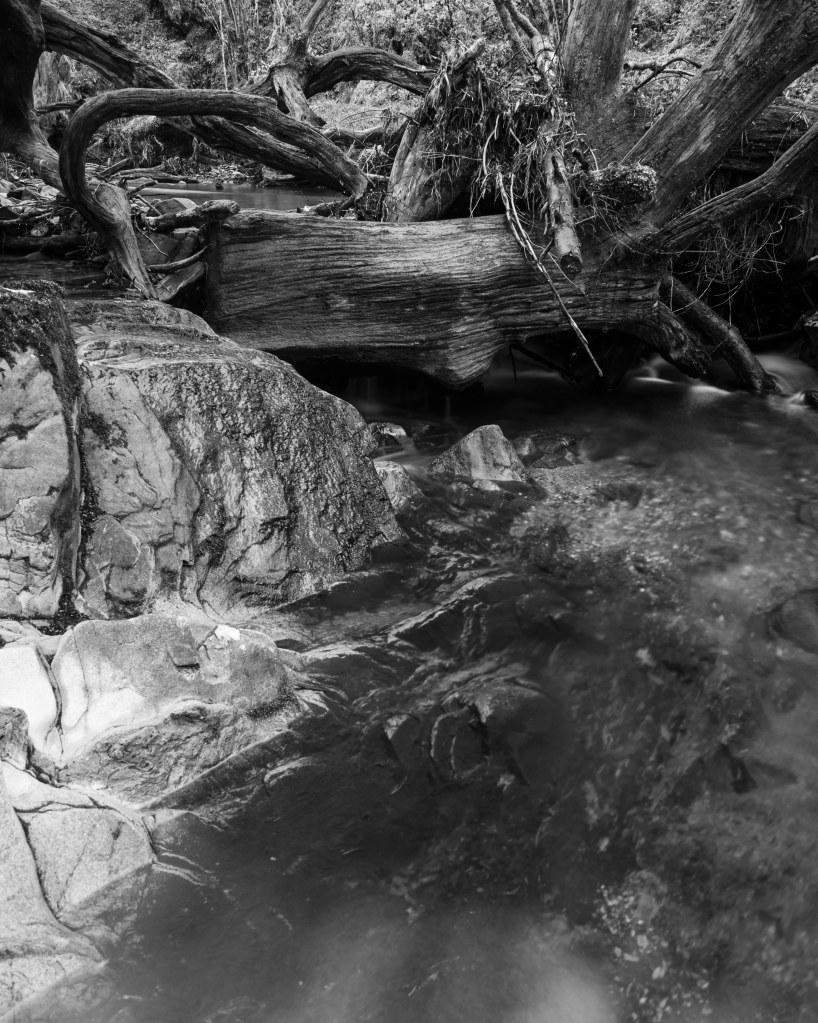 fallen tree scotland