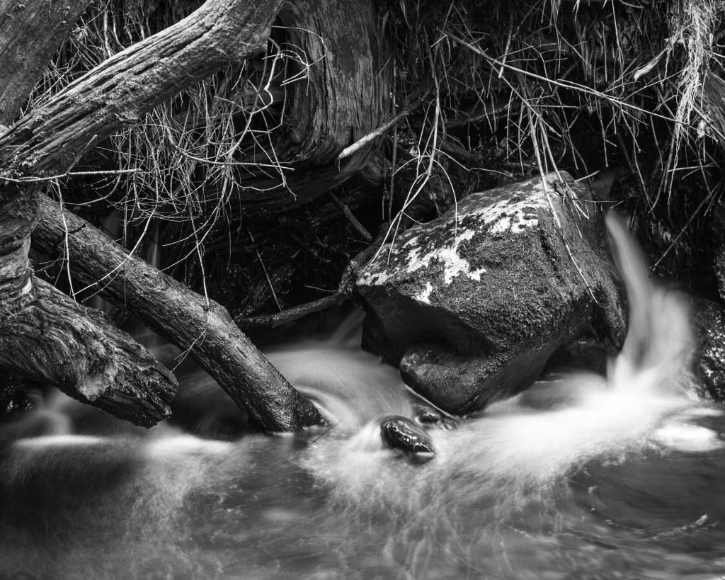 fallen tree river scotland