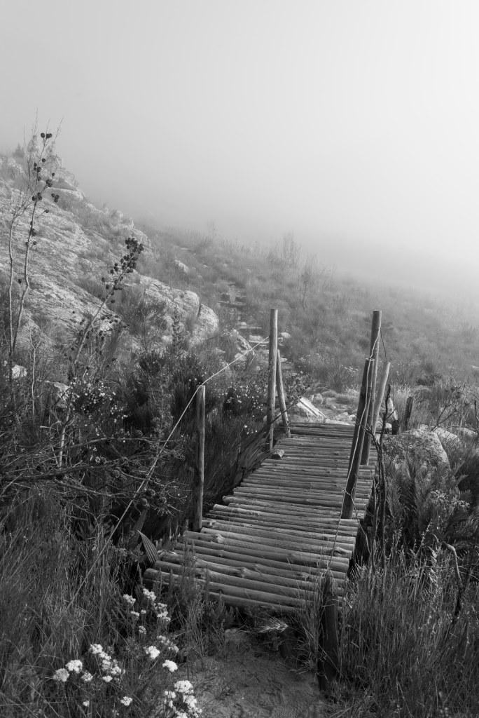 bridge in mist south africa