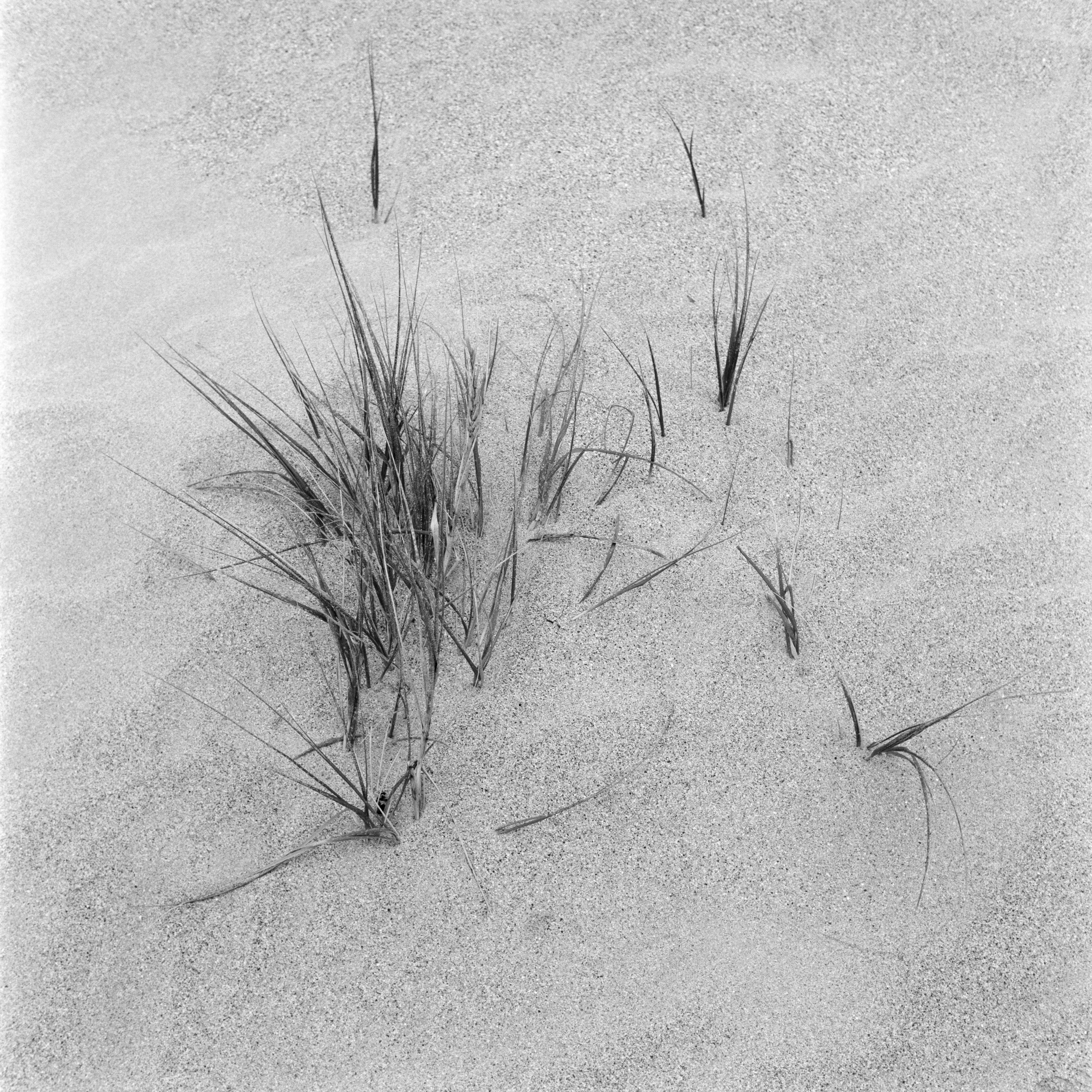 Grasses in dunes south africa landscape photography