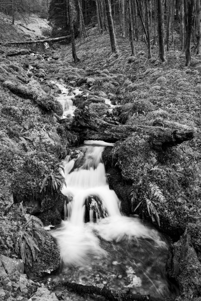 stream water forest scotland landscape photography