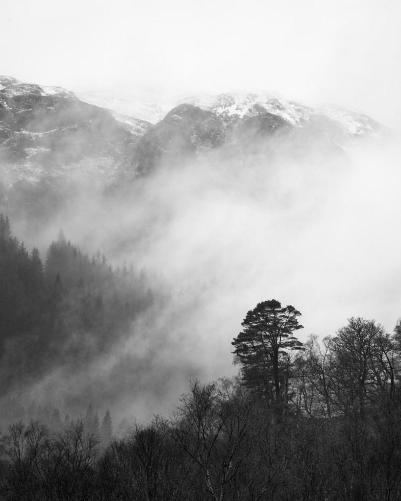 mountain pine tree fog scotland landscape photography